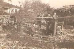 Επεξεργασία ζαχαροκάλαμου για πετμέζι. Δεκαετία 1950