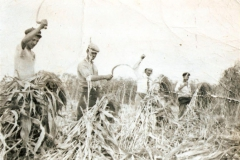 Στο χωράφι κόβοντας σκούπα